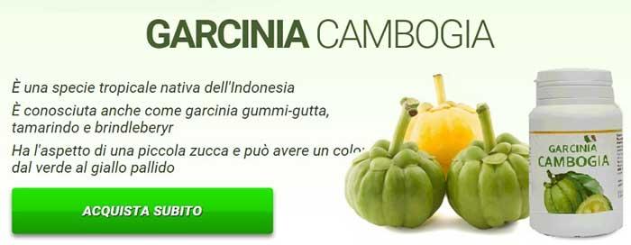 Garcinia Cambogia com'è fatta