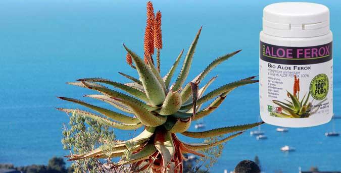 Aloe Ferox Integratore naturale